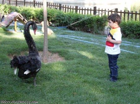باغ پرندگان، خیلی از این قوی سیاه ترسیده بودی