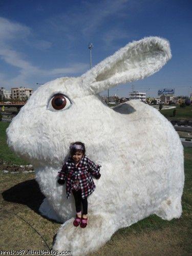 آرنیکا در سال خرگوش