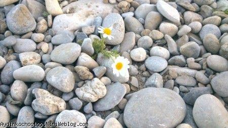 گل و سنگ