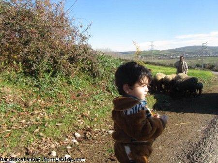 بردیا و گله گوسفندا