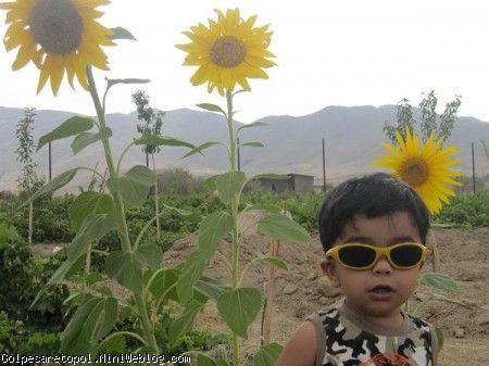 گل آفتابگردون من