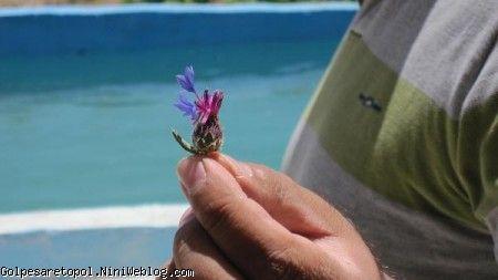 گل چيده شده توسط دستانِ كوچولوي مهبد و تقديم به بابا مهدي جون