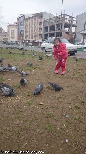 غذا دادن ویانا به کبوترها