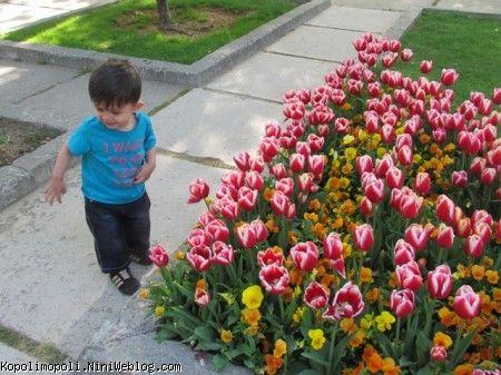 گل قشنگم