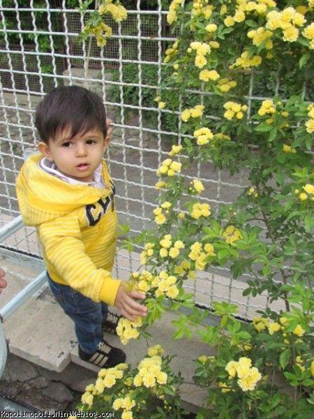 گل من