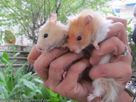 همستر های عمه