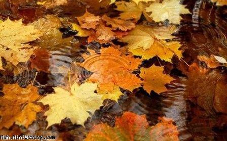 پاییز من