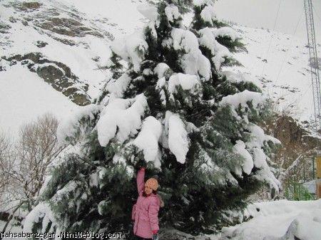 من در کنار درخت کاج