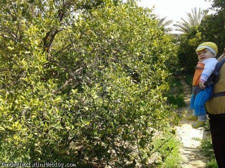 باغ داراب